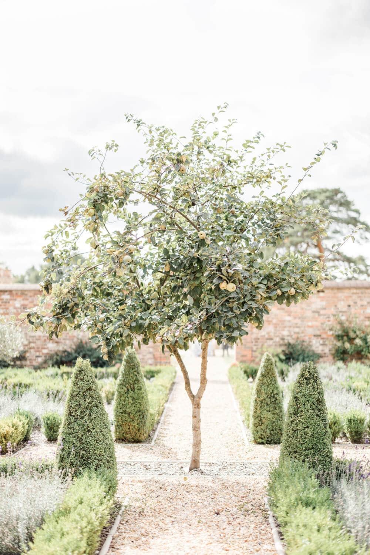 Greentrees Estates Walled Garden Pear Tree